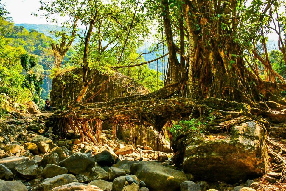 Single Root bridge