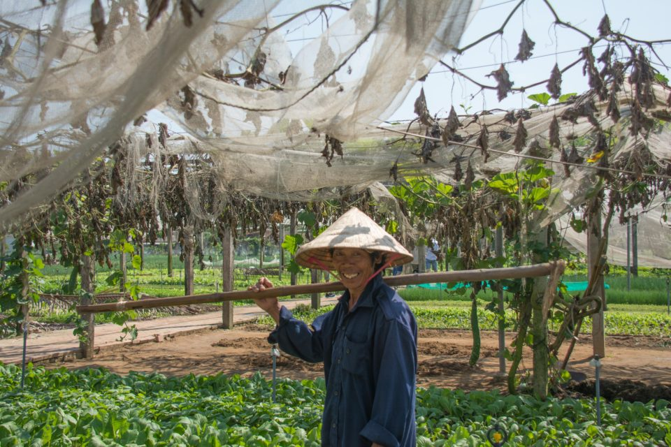 Lady farmer at work somewhere in Central Vietnam